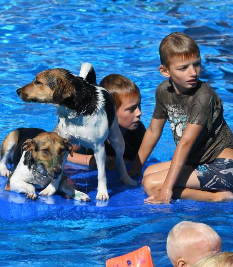Met je hond het zwembad induiken: voor één keer kon het in Lopik