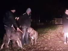 Burgemeester over inzet honden om mensen van Achilles'29-terrein te houden: 'nieuw dieptepunt'