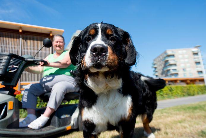Hond Cloë van Wilma Beulakker is woensdag een tijdje ontvoerd geweest.
