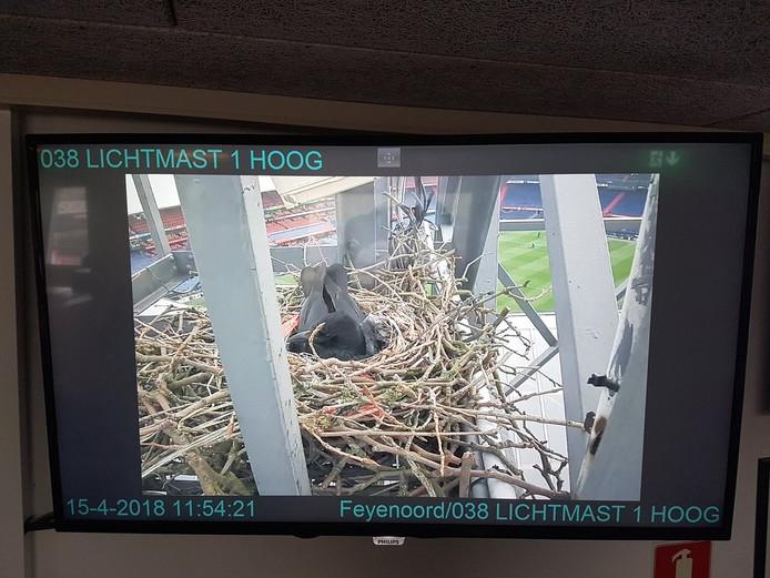 De politie IJsselmonde deelde camerabeelden van het nest op Twitter.