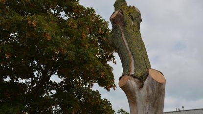 Groendienst laat - bewust - dode boom  op speelplein staan, als broedplaats voor insecten