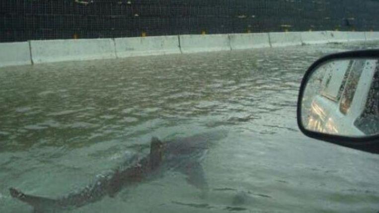 Google het voorbeeld aan van foto's van haaien die in de straten van Houston rondzwommen na en orkaan in 2017 - beelden die indertijd vlotjes circuleerden.