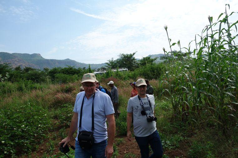 Bezoek aan proefvelden met gewassen die in wisselbouw met sesamzaad kunnen worden verbouwd. Links Dirk Soenens, rechts Grégoire Courme. Beeld wb