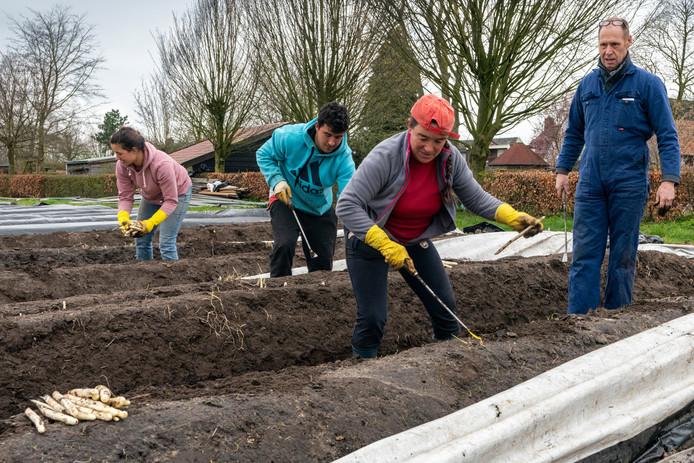 Een Portugese familie aan het werk in het aspergeveld van een maatschap van Erik Verhoeven in Gemert. Eind maart komt de oogst in Cromvoirt op gang en dan moeten de eerste Polen er zijn.