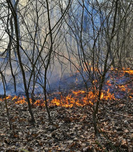 Aansteker gevonden bij bosbrandje in Waalre, Brabantse natuur is alweer vrij droog