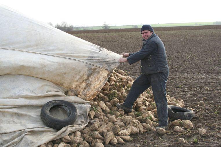 Landbouwer Yves Flawinne overdekt zijn bieten