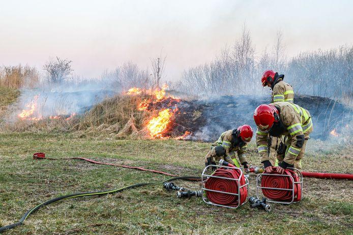 De brandweer moest enkele brandslangen aan elkaar koppelen om met het bluswater bij het brandende riet te komen.