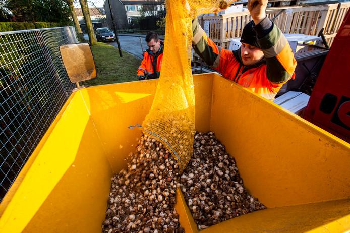 De bloemen uit deze bollen zorgen voor een voedselketen die uiteindelijk de eikenprocessierups moet vellen.