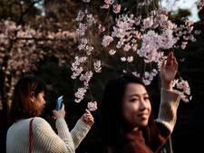 Japan geniet van bloeiende kersenbloesems