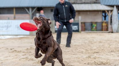 Honden aan de macht op strand van Knokke-Heist