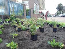 Tegels weg, planten in de grond: Zwollenaren maken buurt groener