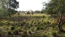 Met een graafmachine is drie hectare heide afgeplagd.