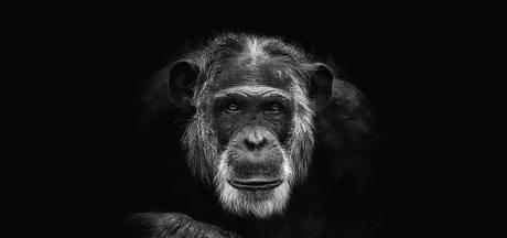 Wereldbekende primatoloog deelt foto van doodgeschoten chimpansee: 'Mike was mijn favoriet'