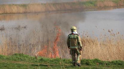 Rietkraag vat vuur in natuurgebied 'Rietveld'