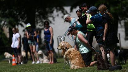 IJsjes en waterpret: zo houden viervoeters én baasjes het hoofd koel op Hondendag