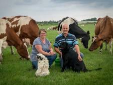Franka heeft 62 koeien: 'Ze maken vriendinnen, en je ziet direct wie moeder en dochter zijn'