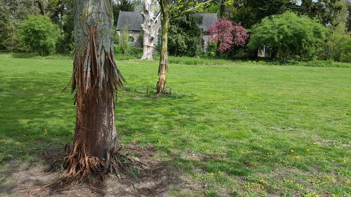 Een van de vernielde bomen in de regio.
