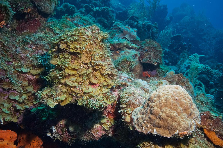 Dood koraal bij Bonaire.