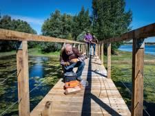 Zicht op 'seksende mannen' passé bij Nijmeegse Bisonbaai: bruggetje biedt uitkomst