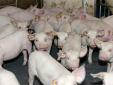 Vier ton extra in subsidiepot voor veehouders die willen stoppen