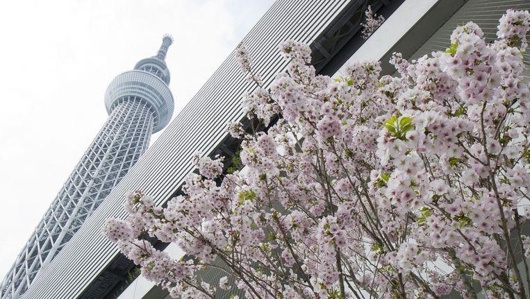 De Tokyo Sky Tree. Beeld epa