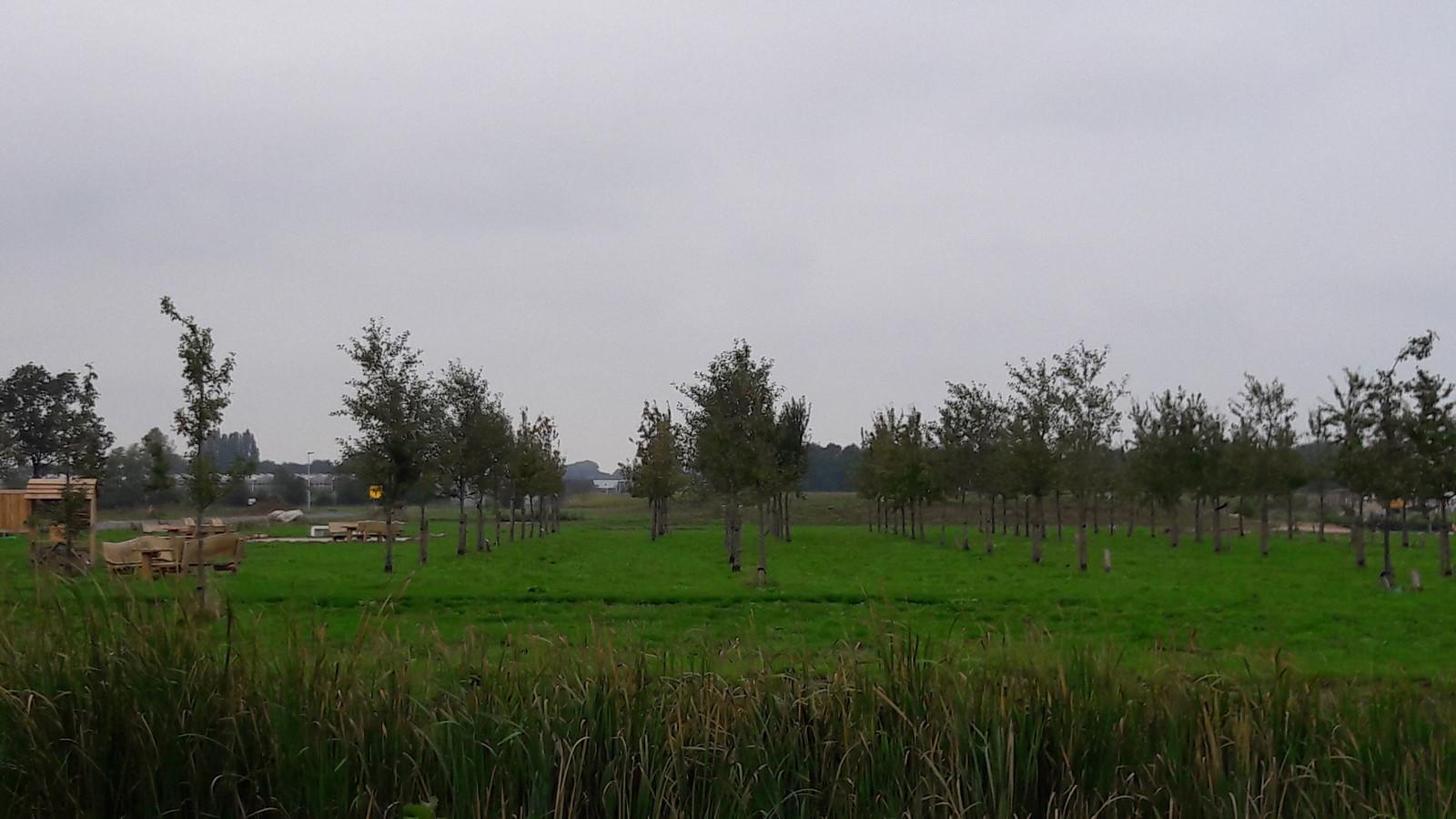 Blik vanaf straat Geerpark op het parkje. Bij de achterste rij bomen zou het gebouwtje moeten komen.