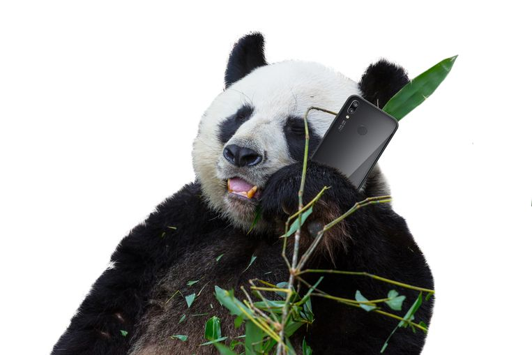 Huawei Panda Beeld Colourbox