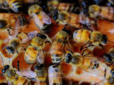 Tweehonderdduizend bijen dood in Eindhoven door 112-storing
