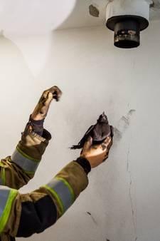Brandweer redt kauw uit kachelpijp in IJsselstein