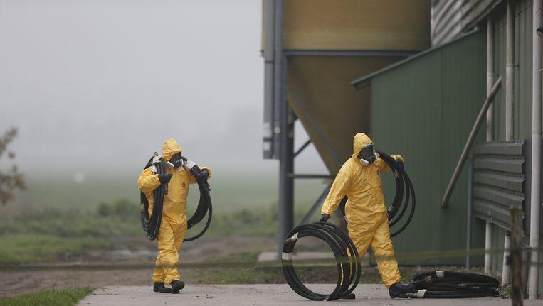 Twee leden van een ruimploeg treffen voorbereidingen bij het legpluimveebedrijf in Zoeterwoude waar vogelgriep is vastgesteld. Beeld anp