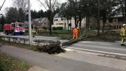 Sint-Jobsesteenweg afgesloten door omgewaaide boom