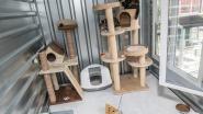 Dierenasiel verkoopt snoep om eten voor katten te kopen