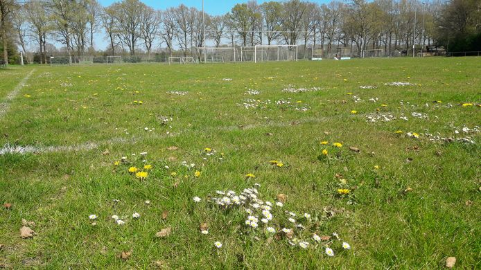 Voetbalveld in coronatijd bij Wodanseck in Wolfheze, waar de spelers niet meer trainen.