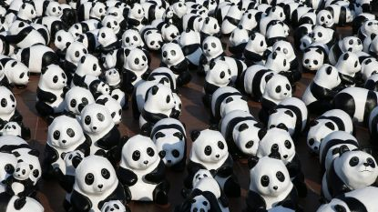 Martelen, moorden en verkrachten: schokkend onderzoek naar parkwachters van WWF