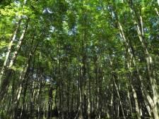 Boxtel maakt werk van 'mini-bosjes'