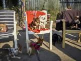 Spelen? Chihuahua's genieten met elkaar van winterzonnetje