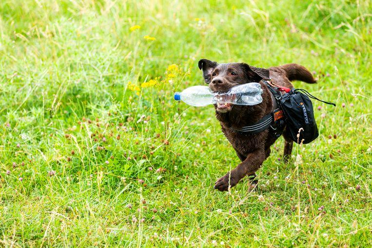 Hond Joy ruimt samen met haar baasje plastic op in en rond Vianen. Beeld Jiri Buller