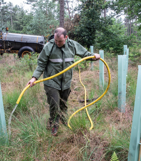 Staatsbosbeheer rijdt met watertank door de bossen bij Leende om jonge boompjes van droogte te redden