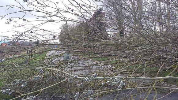 GEETBETS-stormschade-boom spoorwegstraat