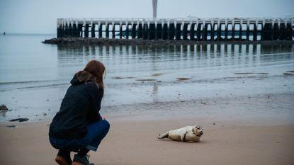 Voor eens en voor altijd: dit Oostends zeehondje is niét ziek