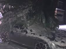 Bentley Michael Owen bedolven onder ondergesneeuwde boom