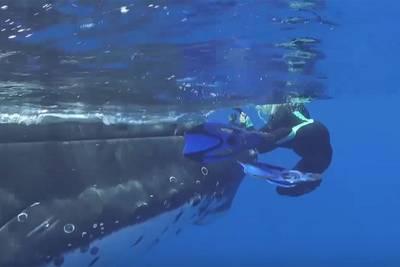 snorkelende--walvis-beschermde-mij-tegen-enorme-haai