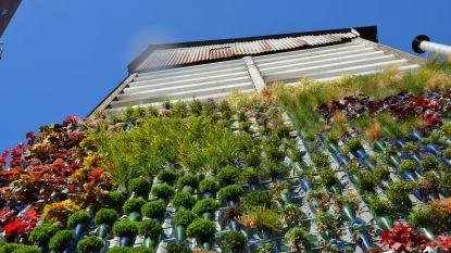 Vaartkaters huldigen project 'Groene muren, goede buren' in