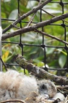 Dierentuin Overloon verwelkomt palmgiertje: 'Bijzonder om te kunnen meemaken'