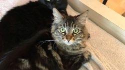 Twee katten bewonen een studio van 1.500 dollar per maand… in hun eentje