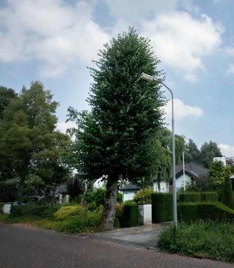 Familie Van Kessel wil dat boom voor hun deur wordt omgezaagd, maar de gemeente laat hem staan