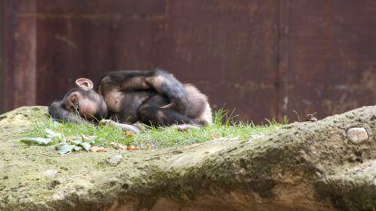 Waarom de aap meer slaapt dan wij