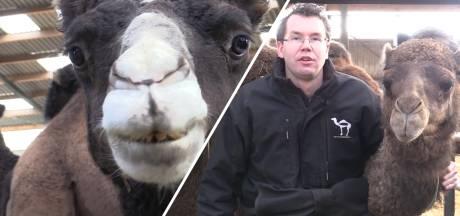 De leukste vacature van het moment: word jij kamelenmelker?