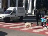 Un chien errant aide des enfants à traverser
