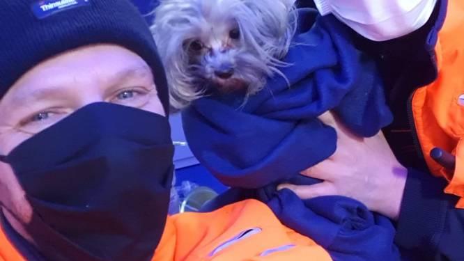 Huis onbewoonbaar na keukenbrand, brandweer redt hondje